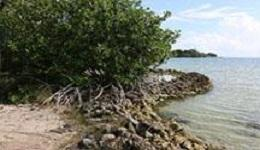 Belize shoreline with mangroves